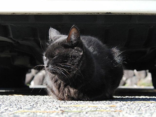 081130cat2